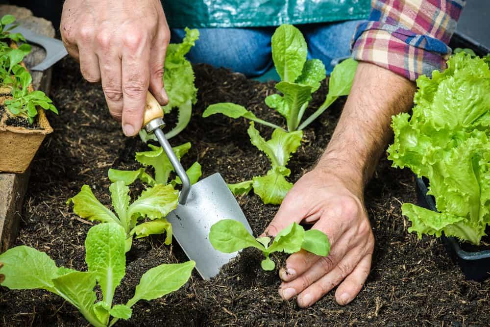 Orenda Home Garden_How to Start an Organic Vegetable Garden