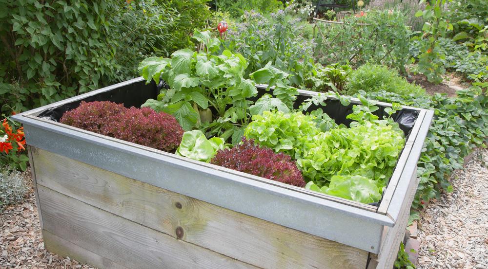 Orenda Home Garden_Starter Guide to Wicking Bed Gardening