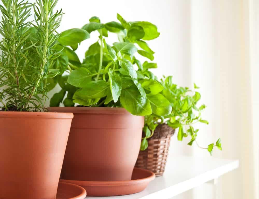 Orenda Home Garden_How to Start Your Herb Garden in Pots