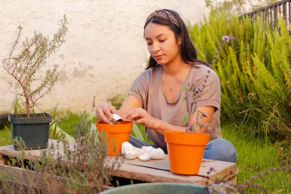 Orenda Home Garden_Eggshells in the Garden as Soil Amendment