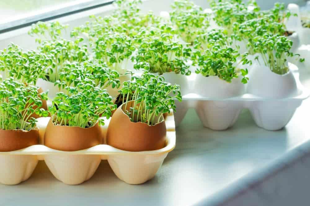 Orenda Home Garden_Eggshells in the Garden as Starter Pots