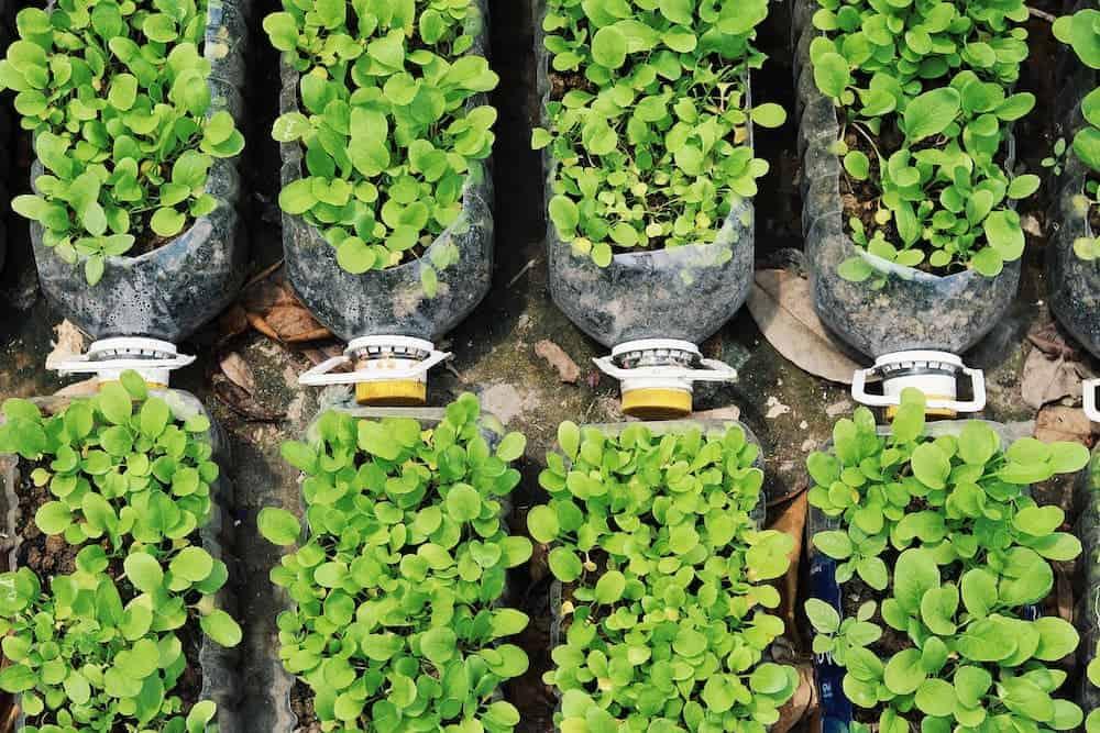 Orenda Home Garden_How to Build a Plastic Bottle Garden