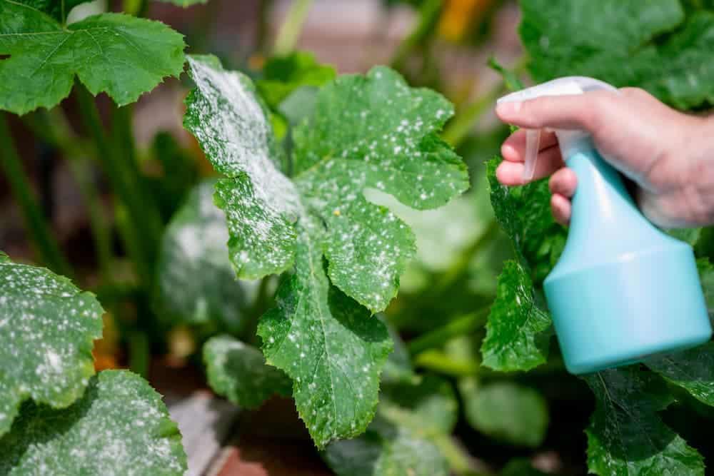 Orenda Home Garden_How to Make a Homemade Garden Spray