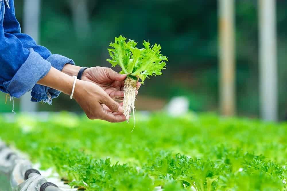 Orenda Home Garden_Benefits of Hydroponics System