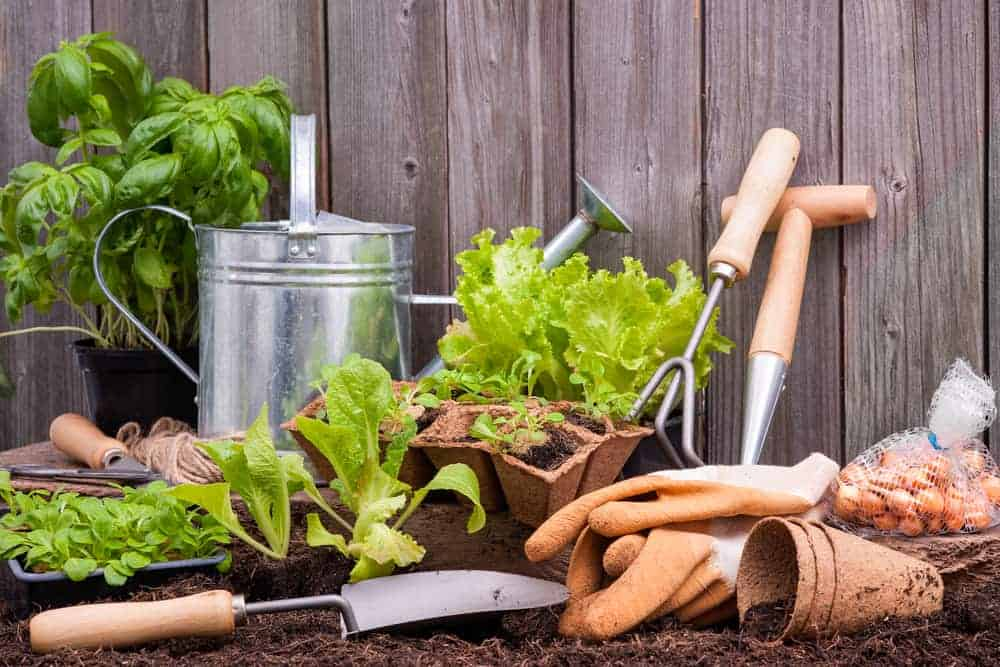 Orenda Home Garden_Gardening Steps for Beginners