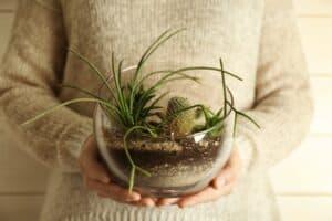 Orenda Home Garden_Terrarium Centrepiece for an Indoor Garden