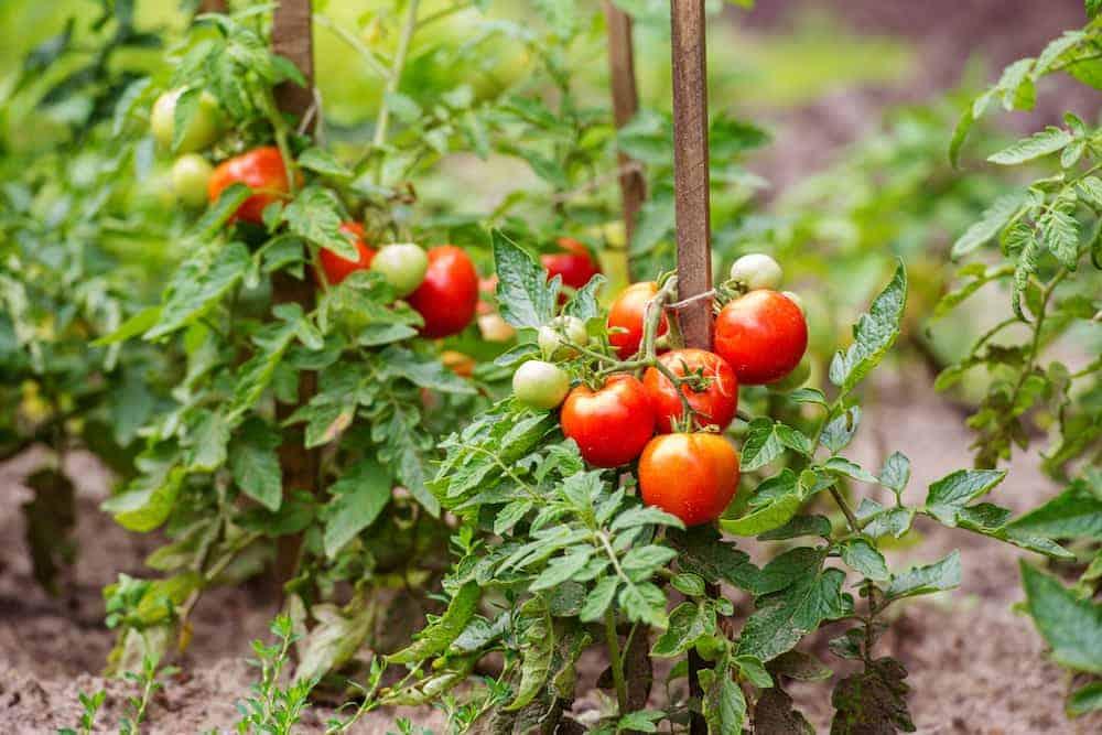 Orenda Home Garden_Soil pH and Baking Soda in the Garden